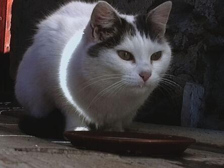 Peter Fischli & David Weiss, 'Büsi (Kitty)', 2001
