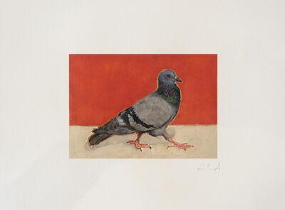 Calixte d'Annunzio, 'Pigeon II', 2019