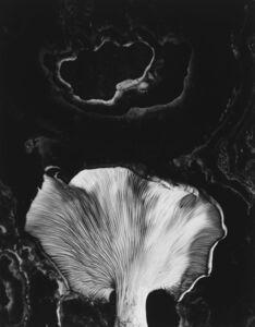 Paul Caponigro, 'Fungus, Ipswich, MA', 1960