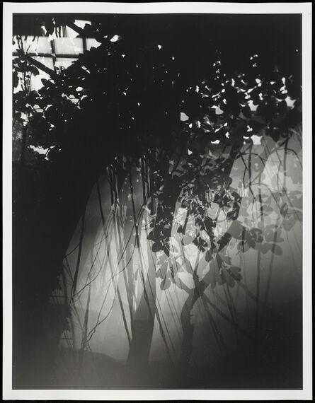 Erik Steffensen, 'Botanical Garden/Bronx Zoo XXII', 2015