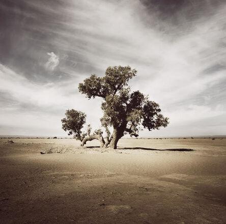 Bernhard Quade, 'Morocco Tree Sahara', 2008