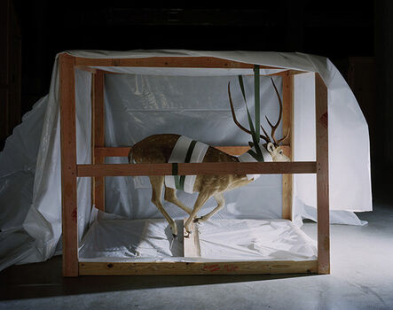 Richard Barnes, 'Smithsonian, Suspended Deer', 2005