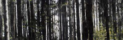 Azade Köker, 'Schwarzwald / Black Forest', 2016