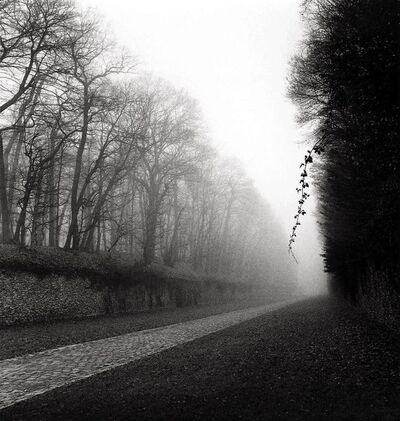 Michael Kenna, 'Suspended Vine, Marly, France', 1995