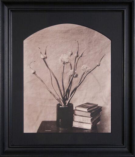 John Dugdale, 'Allium, Stone Ridge, NY', 1990