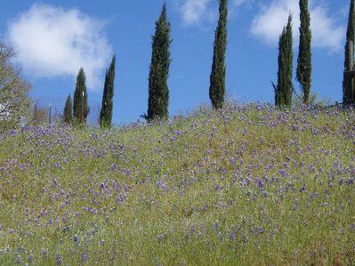 Jane Paradise, 'Vichy, California', 2009