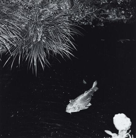Issei Suda, 'Yugano, Shizuoka, 1981'