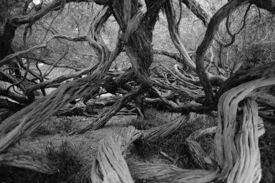 Riccardo Wolfgang, 'Natural Confusion (Nature Landscape Photography)', 2019