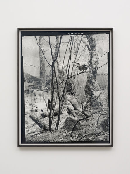 Gerard Byrne (b. 1969), 'Eurasian Jay - Fourth beast', 2018