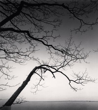 Michael Kenna, 'Eloquent Trees, Kussharo Lake, Hokkaido, Japan', 2013