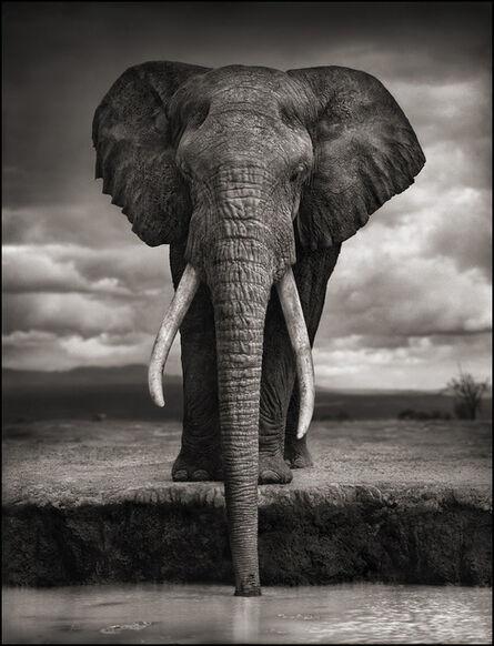 Nick Brandt, 'Elephant Drinking, Amboseli ', 2007