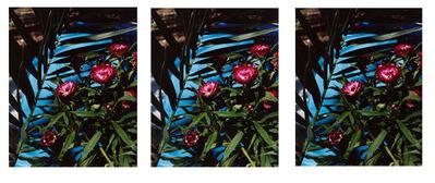 Annette Kelm, 'Strawflowers', 2013