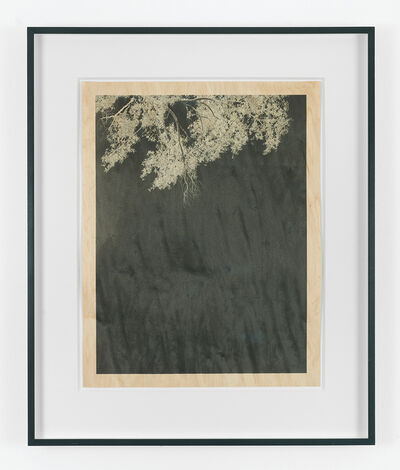 Clifford Ross, 'Trees VII',  2010