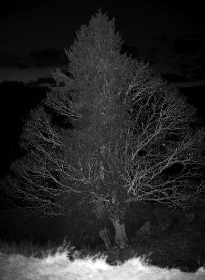 Herbert Weber, 'Behauptungen - Natures', 2010