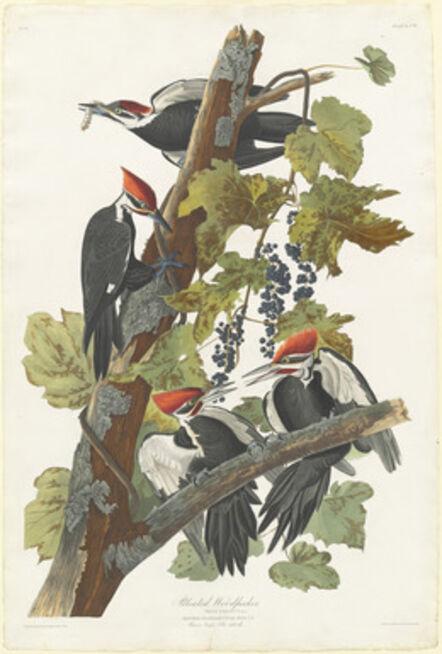 Robert Havell after John James Audubon, 'Pileated Woodpecker', 1831