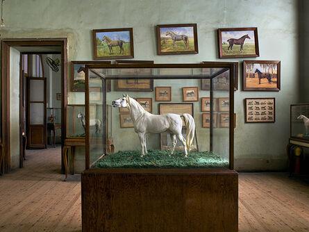 Richard Barnes, 'Horse & Horse Paintings, Cairo ', 2009