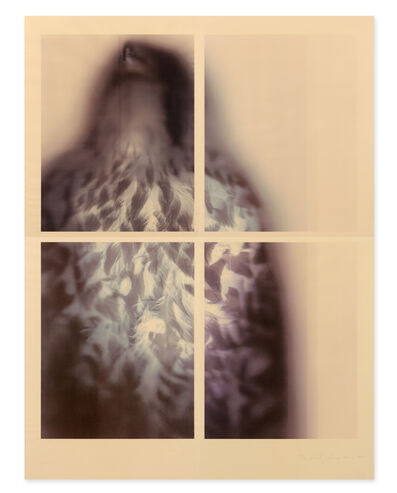 Ann Hamilton, 'Peregrine Falcon', 2017