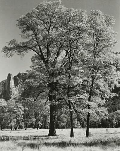 Ansel Adams, 'Autumn-Yosemite', ca. 1932