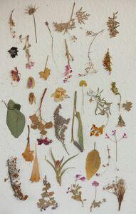 Lien Botha, 'Plant Press Collection', 2009