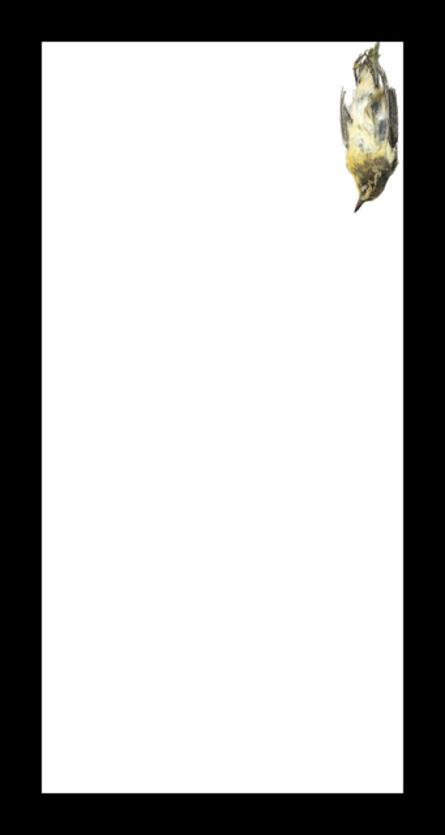 Thaddeus Holownia, 'Baybreasted Warbler', 2017