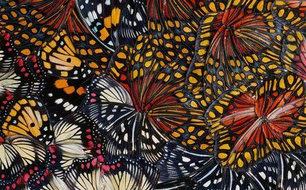 Nathalia Edenmont, 'Singularity (collage)', 2011
