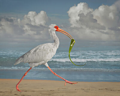 Cheryl Medow, 'White Ibis with Fish', 2014