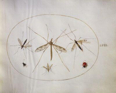 Joris Hoefnagel, 'Animalia Rationalia et Insecta (Ignis):  Plate LVII', ca. 1575/1580