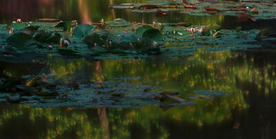 Michael Wesely, 'Giverny (8.29 - 10.30 Uhr, 26.6.2014)', 2014