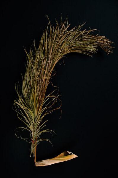 Lana Mesić, 'Palmeira encontrada nas margens dos rio', 2015