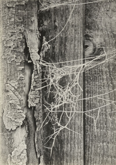 Piet Zwart, 'Berijpt spinrag', 1930