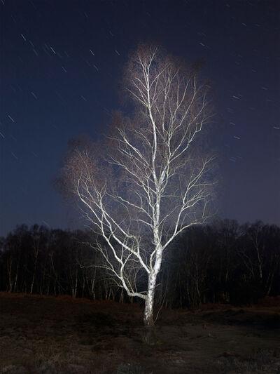 Shinwook Kim, 'Matley Wood', 2012