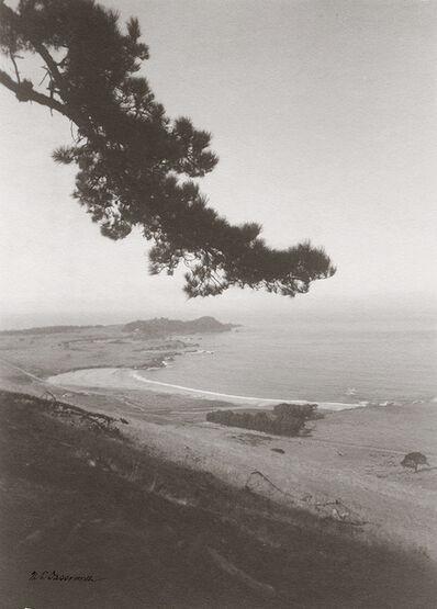 William Edward Dassonville, 'Tree Branch Overlooking Sea Coast', 1920s / 1920s