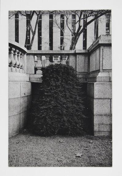 Philip Van Keuren, 'Shrub II', 2016