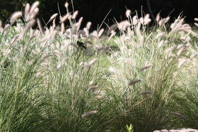 Margaret Smith, 'Bird in the Grass', 2011-Printed 2017