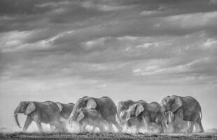David Yarrow, 'Desert Army', 2020