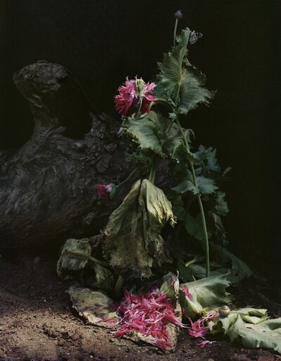 """Sharon Core, 'Untitled #1, from the series """"Understory""""', 2014"""