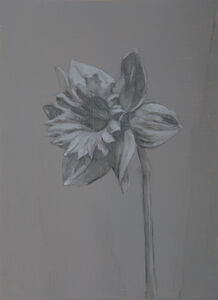 Miguel Branco, 'Untitled (Flower)', 2015