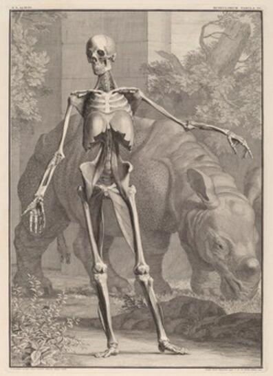 Jan Wandelaar, 'Musculorum Tabula IV', 1742