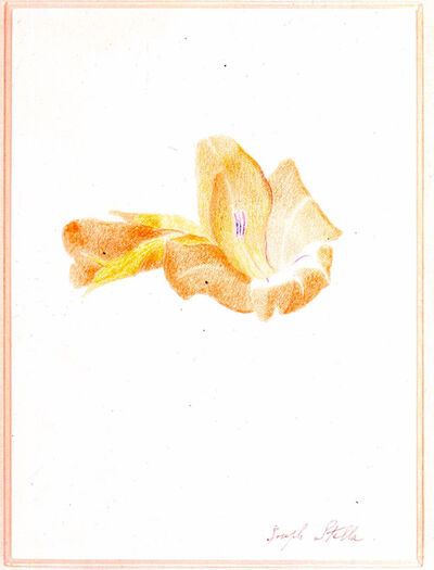 Joseph Stella, 'Orange Gladiola', ca. 1915