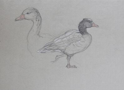 Patricia Traub, 'Icelandic Goose, Reykjavik, Iceland', 2004