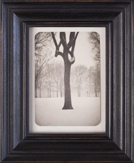 Jefferson Hayman, 'Tree, Central Park', 2007