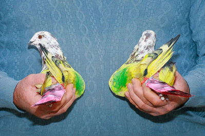 Ricardo Cases, 'Untitled (pigeon on hand)', 2011