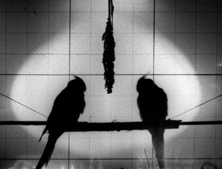 Reynold Reynolds, 'The Lost(Loop 5)', 1930-2013