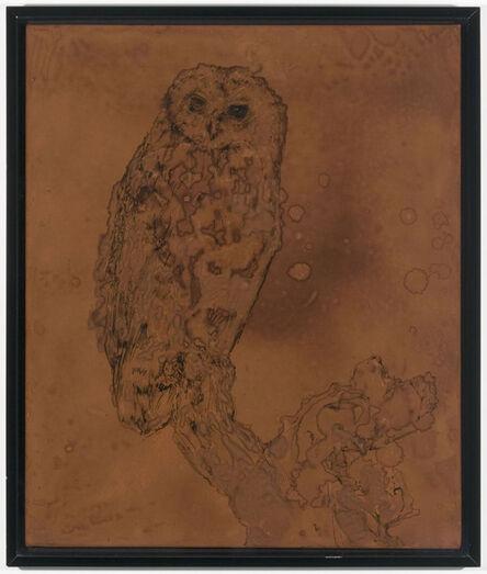 David Noonan, 'Owl', 2003