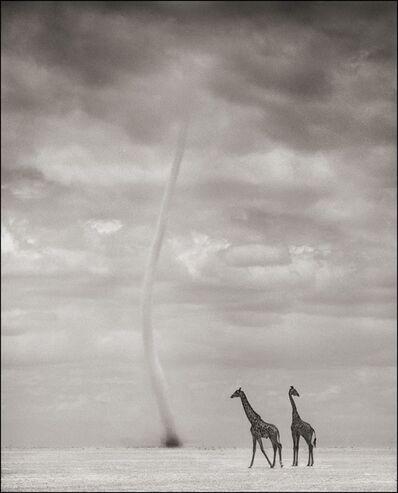 Nick Brandt, 'Giraffes & Dust Devil, Amboseli 2007', 2007