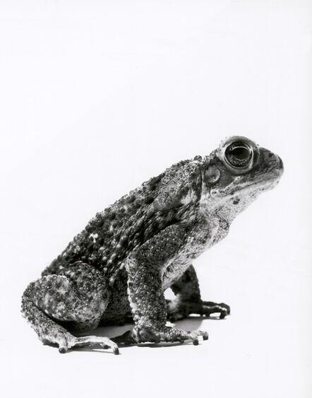 Walter Schels, 'Frog', 2000