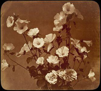 Adolphe Braun, '[Flower Study, Rose of Sharon]', ca. 1854