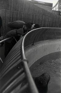 Garry Winogrand, 'The Zoo, New York City (walrus)', 1963
