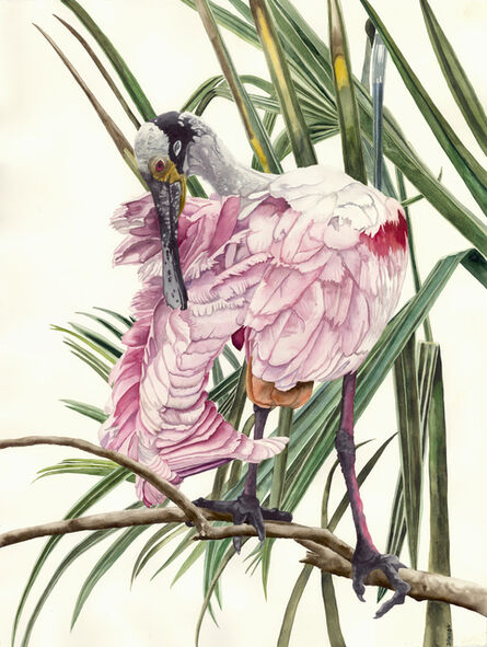 Carol Dawson, 'Preening: Roseate Spoonbill', 2020