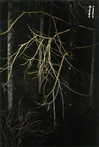 Jitka Hanzlová, 'Antlers', 2005